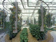 indoor greenhouse using aeroponics on http://www.aeroponichowto.com