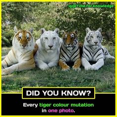 Majestic Animals, Rare Animals, Cute Baby Animals, Animals And Pets, Funny Animals, Strange Animals, Animals In The Wild, Big Animals, Tiger Pictures