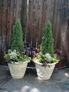 alberta spruce container garden - Google Search