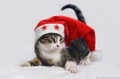 Photograph Santa's little helper by Zoran Milutinovic on 500px