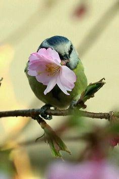 Hawaii bird...hehe