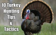 10 Turkey Hunting Tips And Tactics. hunters must change and adjust their hunting style to keep up with the times. These tips will help you do just that.