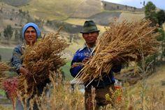 """Αφύπνιση Συνείδησης: Quinoa, Amaranth, """"Απαγορευμένες"""" Υπερ-τροφές."""