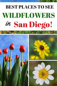 Are you planning a vacation to San Diego? Check out this list of the Best Places To See Wildflowers in San Diego in the spring.
