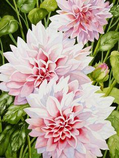 Fern Ness Pink Dahlia Watercolor floral art