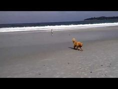 Dog Beach in Carmel