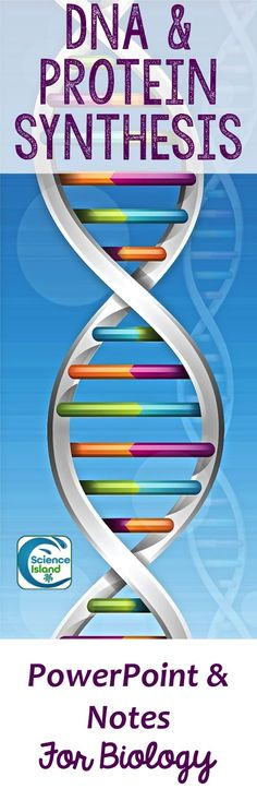 During DNA replication, each strand of the original molecule acts as - best of dna blueprint of life worksheet