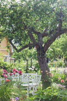 Perennial Flower Gardening - 5 Methods For A Great Backyard Kolonitrdgrd