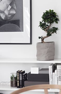 Bonsai tree and all things grey Decor, House Styles, Interior Inspiration, Decor Design, Home And Living, Interior, Home Decor, House Interior, Home Deco