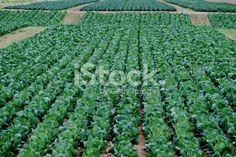 The only real difference between sustainable and conventional farming lies in the methods used to grow crops. Deep Photos, Crop Production, Agricultural Science, Agriculture, Farming, Abstract Photos, Image Now, Fertility, The Row