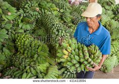 Tawau Sabah Malaysia - April 24, 2016 : Transportation worker unload banana from a boat at Tanjung Batu Tawau Jetty. The banana is imported from Indonesia for Malaysian market. - stock photo