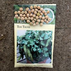 The Perfect Pea for Kids to Grow – Tom Thumb Growing Vegetables, Gardening, Kids, Young Children, Boys, Lawn And Garden, Children, Planting Vegetables, Children's Comics