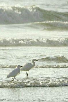 ... Weißes Meer, Cremeweiß, Weißen Farben, Natur, Die Vögel,  Sehenswürdigkeiten, Bilder Der Liebe, Strand, Küche, Schönheit,  Hervorragend, Wasser, Muscheln, ...