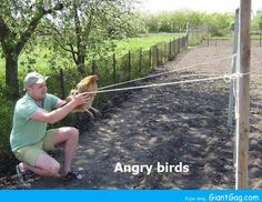 Funny pictures about Angry Birds In The South. Oh, and cool pics about Angry Birds In The South. Also, Angry Birds In The South photos. Funny Baby Images, Funny Pictures For Kids, Funny Meme Pictures, Funny Kids, Jokes Photos, Angry Birds, American Funny Videos, Funny Dog Videos, Justin Bieber Jokes