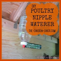 Make your own inexpensive poultry nipple waterer