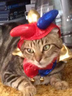 Gpa dressed as a Jester. #halloween #pets
