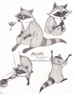 Meeko sketches #Disney #Pocahontas #raccoon