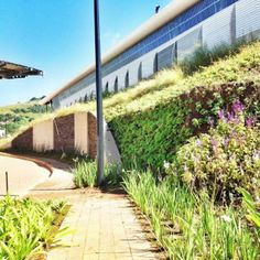 Successful Gardening on a Vertical, Plants are Thriving - DesignMind Entrance, Landscaping, Survival, Sidewalk, Articles, Success, Gardening, Plants, Design