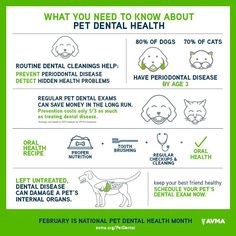February is Pet Dental Health Month! Learn more about the ...