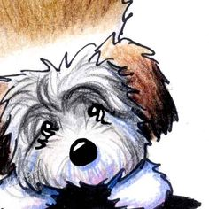 Original Drawing Playful Havanese Dog Breed ACEO Art by KiniArt, $40.00