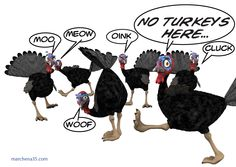 'No Turkeys Here...'