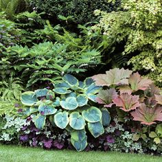 "Seattle Border: Hosta ""Frances William""; Above Hosta-Solomon's Seal; Center Right-Rodgersia podophylla 'Rotlaub' (Use dwarf oakleaf hydrangea (H. quercifolia ""Munchkin"" or ""Ruby Slippers"") instead); Far Center-Hydrangea HM ""Glowing Embers""; Bottom-Wood Anemone, Heuchera ""Velvet Night"", Bishops Weed, Drooping Leucothe, Maidenhair Fern,"