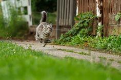 ;) http://roeselien.wordpress.com/2012/09/14/76-a-cat-on-a-wet-tin-roof/ (NL)