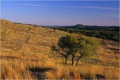 Scrub oaks - Balcones Canyonlands National Wildlife Refuge, Burnet County, Texas  Model COOLSCAN V ED https://www.facebook.com/jasonmerlo