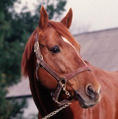 Secretariat a racing legend that won the Triple Crown. Winner of the Belmont Stakes by 31 lengths. America's hero and racing legend. Cute Horses, Pretty Horses, Horse Love, Horse Girl, Barrel Racing Horses, Horse Racing, Thoroughbred Horse, Clydesdale Horses, Breyer Horses