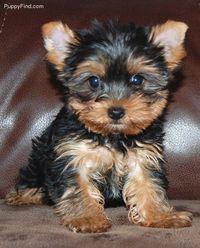 i want one  soooo cute