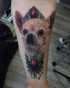 Chihuahua tattoo  #chihuahua #tattoo #kadachi #chilove