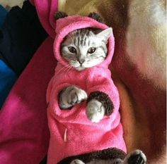 Amazing Cat Fleece
