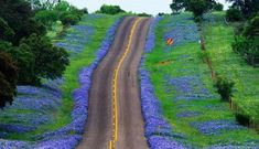 Bluebonnets and the Canyon of the Eagles in the Texas Hill Country - RV Lifestyle
