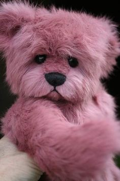 Teddy Bear - Radiant Orchid Color