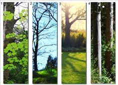 Printable Bookmarks tree prints Four Photographic  by NewCreatioNZ, $7.00