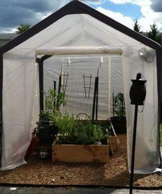 Amazon.com: Spring Gardener Gable Greenhouse, 6 Feet X 8 Feet X 7