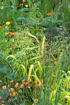 Pure Land Foundation Garden designed by Fernando Gonzalez, RHS Chelsea Flower Show 2015. Plants include: Geum 'Fire Storm', Geum 'Lady Stratheden', Briza media 'Limouzi'.