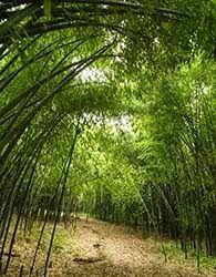 Hidden New Jersey - the bamboo grove in Rutgers Gardens, New Brunswick, NJ.