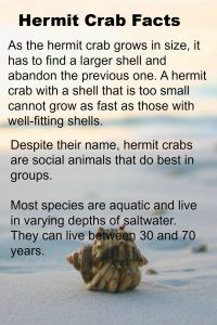 Notes on a Hermit Crab - A Nature Object Lesson