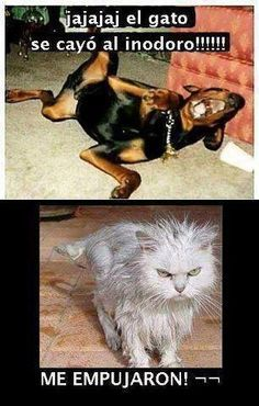 Dog Memes To Prove Whos The Boss - Funny Animal Quotes - - 30 Funny Cat Vs. Dog Memes To Prove Whos The Boss Lovely Animals World The post 30 Cat Vs. Dog Memes To Prove Whos The Boss appeared first on Gag Dad. Funny Animal Jokes, Funny Dog Memes, Cute Funny Animals, Funny Animal Pictures, Cute Baby Animals, Cat Memes, Funny Dogs, Cute Cats, Animal Humor