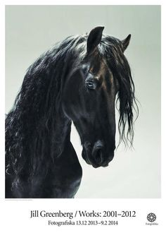 Jill Greenberg Casey 4-50   Fotografiska Posters Creative Design, Design Art, Jill Greenberg, Amazing Nature, Fur Babies, Horses, Animals, Kids Room, Faces