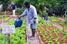 'Moradores em situação de rua cultivam horta comunitária em abrigo de SP'