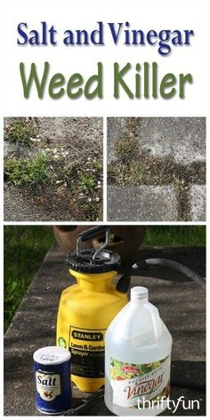 This page contains a salt and vinegar weed killer recipe. You can mix up a homemade weed killer solution using salt and vinegar.
