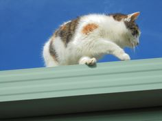 Hermyne on the roof