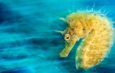 Prêmio internacional destaca as melhores fotos subaquáticas