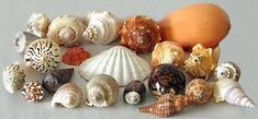 Картинки по запросу seashell busts,
