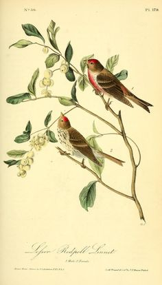 The birds of America : from drawings made in th...
