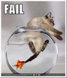 The goldfish has spunk