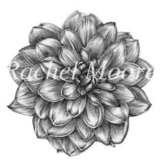 dahlia tattoo for if i ever have another daughter p pretty art pinterest grandmothers. Black Bedroom Furniture Sets. Home Design Ideas
