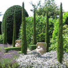 Google Image Result for http://www.passieflora.be/artikelen/andere/Creative%2520Maintenance%2520-%2520Cupressus%2520sempervirens,%2520perfect,%2520West%2520Sussex.jpg